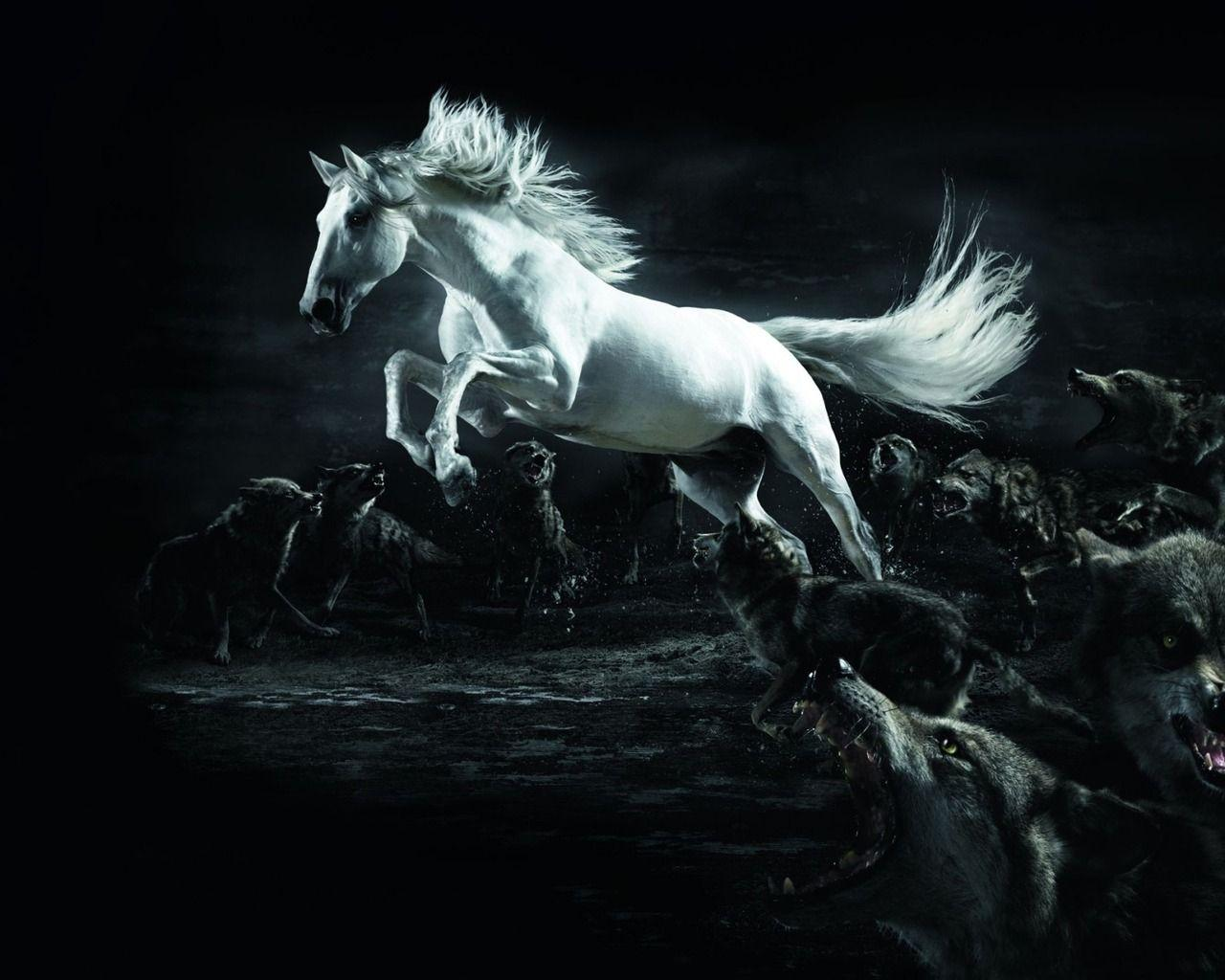 White Horse Surrounded by Wolves wallpapers