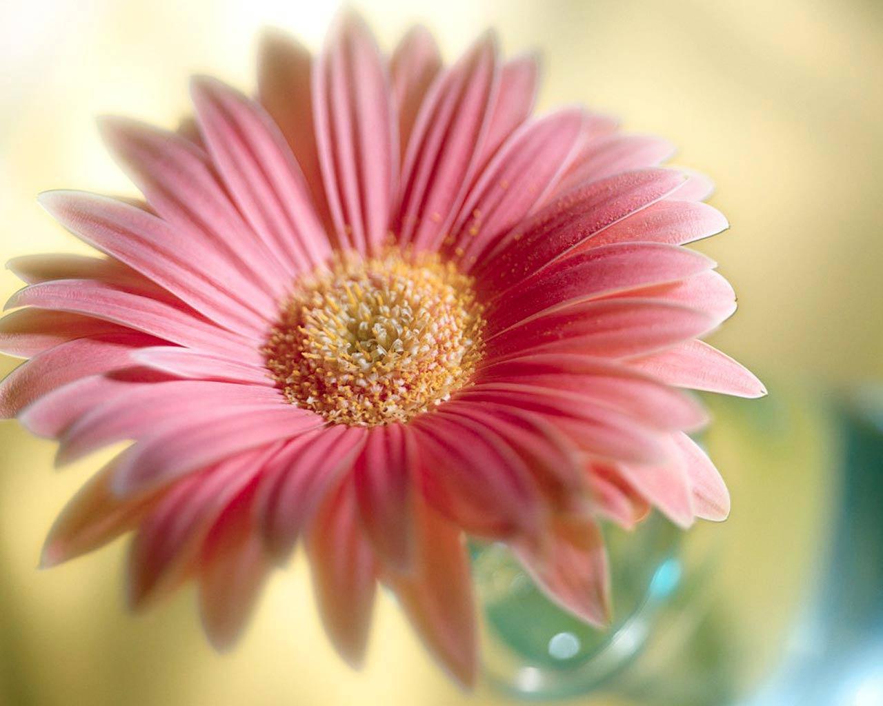 Wallpapers For Natural Flower Wallpaper Desktop