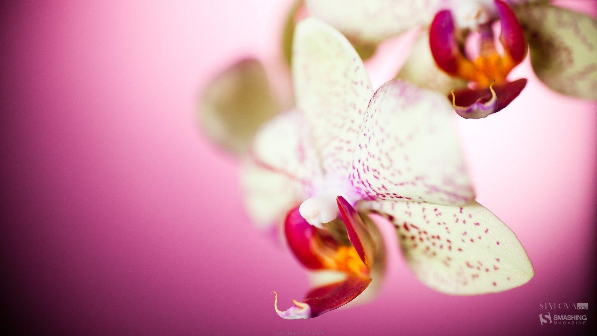 Habrumalas orchids in water wallpaper images - White Orchid Wallpapers Wallpaper Cave