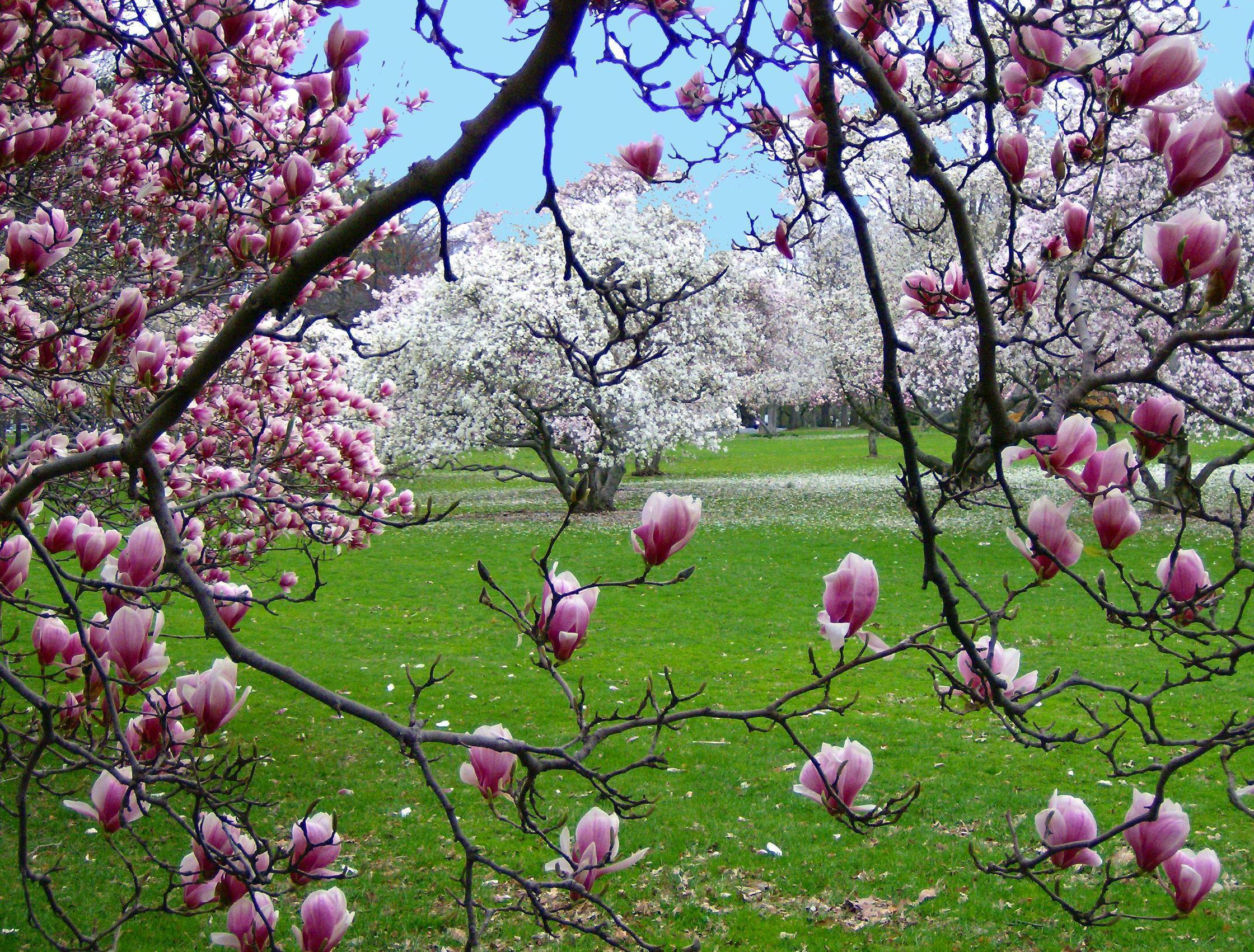 spring scenes wallpapers wallpaper cave