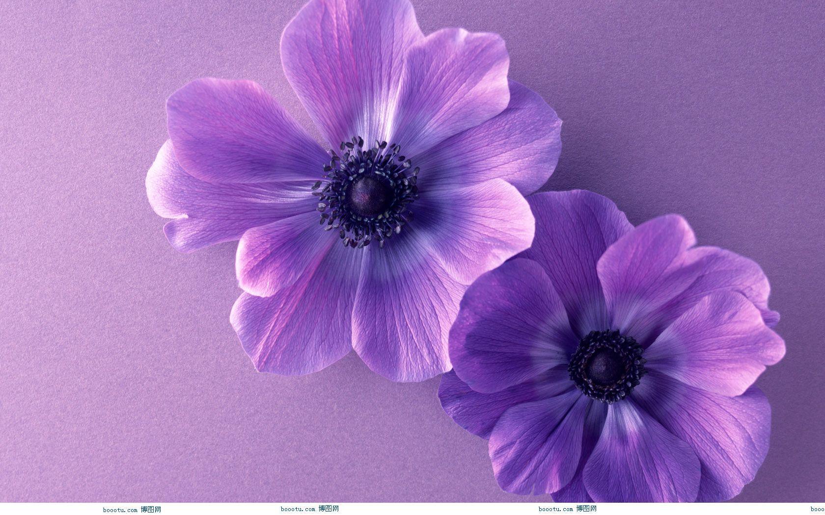 cute purple wallpapers wallpaper cave