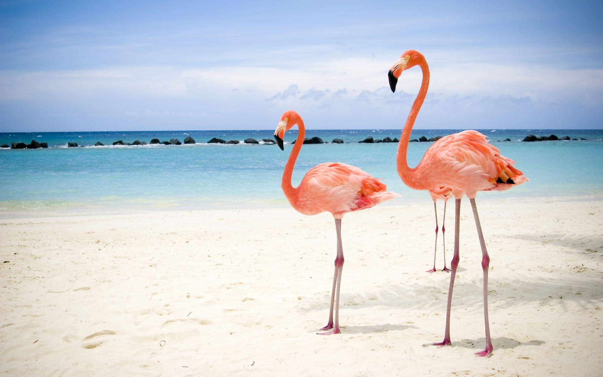 Most Downloaded Flamingo Wallpapers