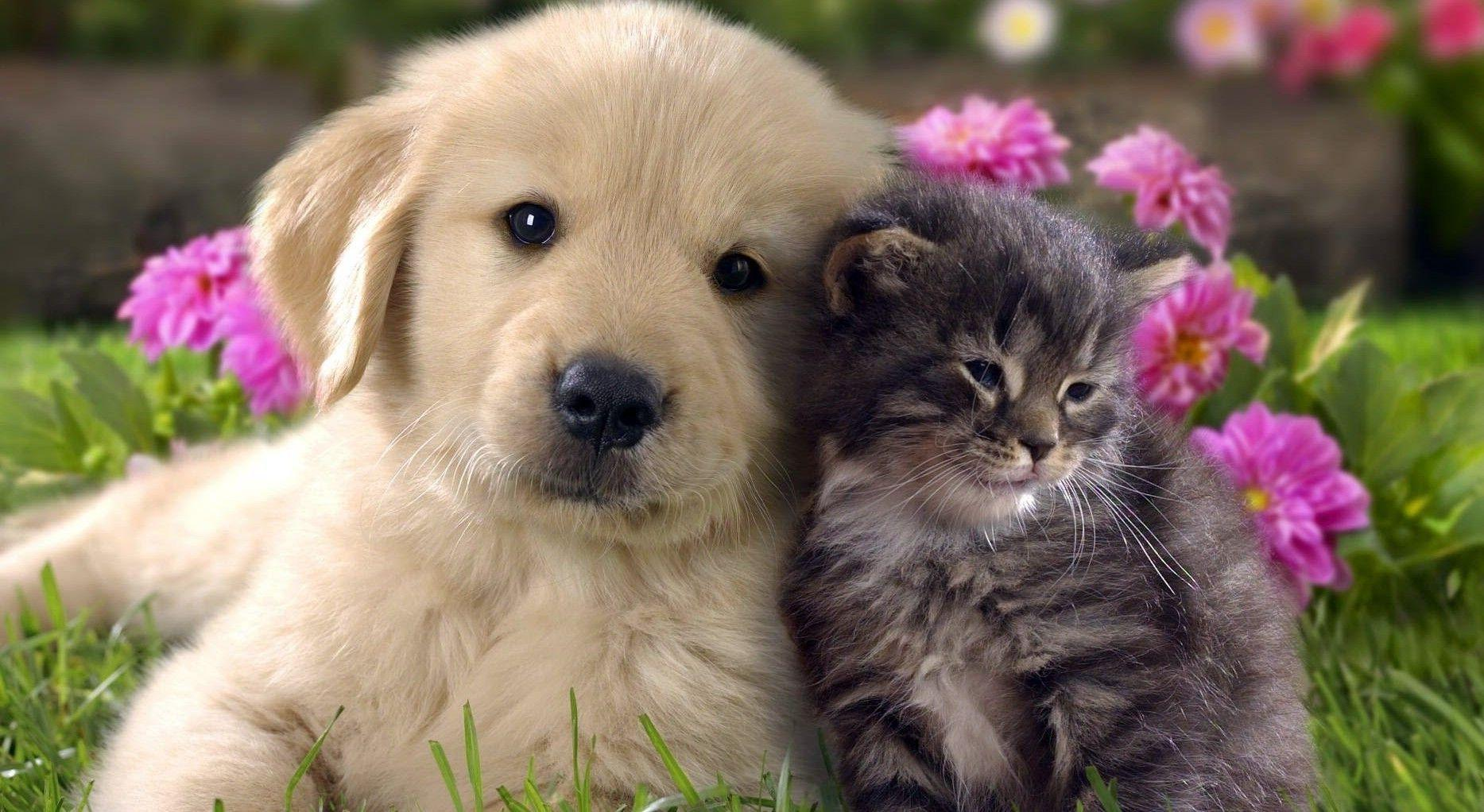 Cat And Dog Desktop Backgrounds Picture, Wallpapers, HD Wallpapers