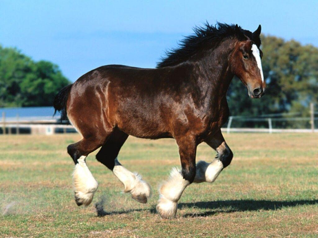 free horse screensavers and - photo #23