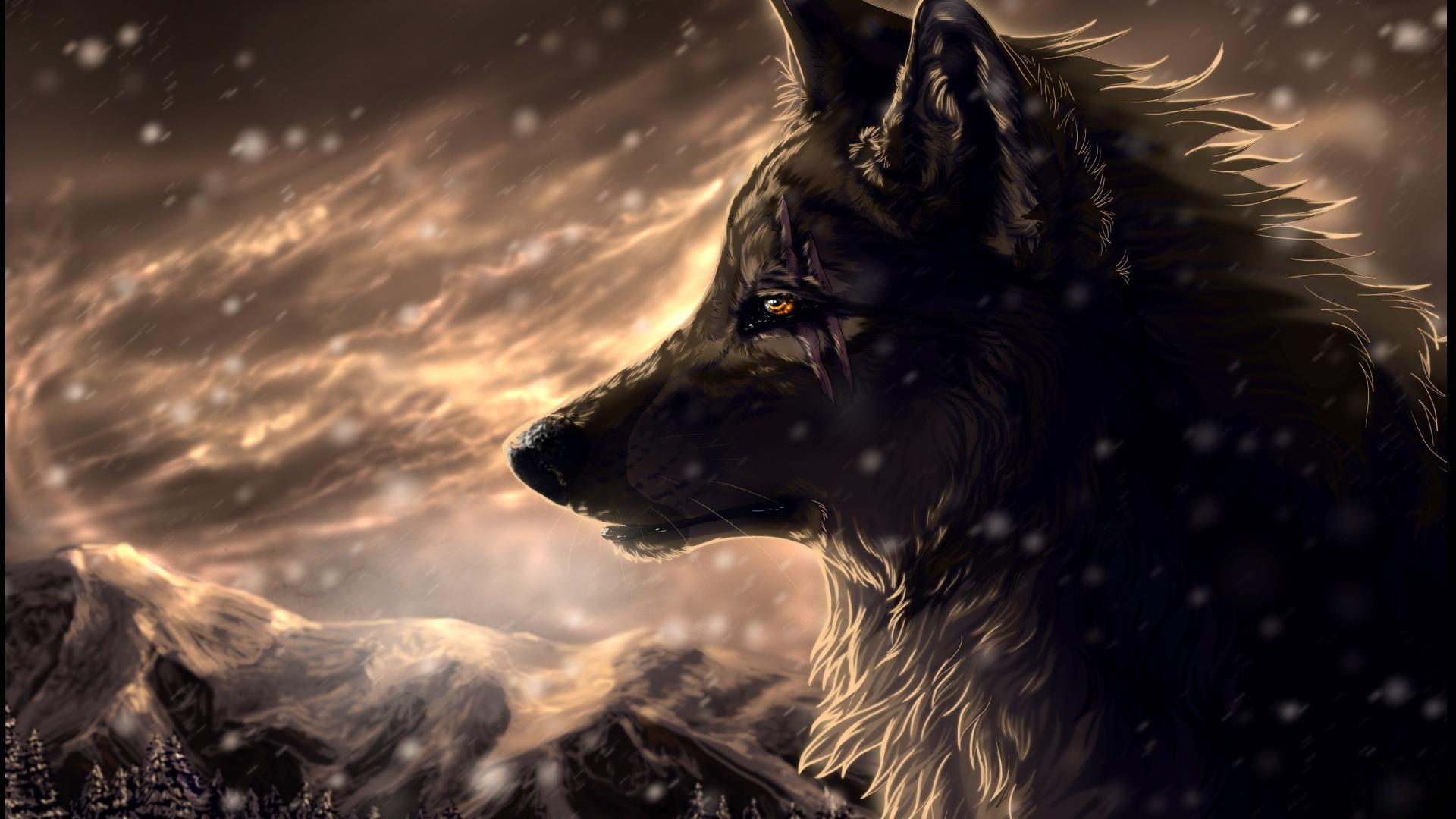 wolf hd wallpaper cave
