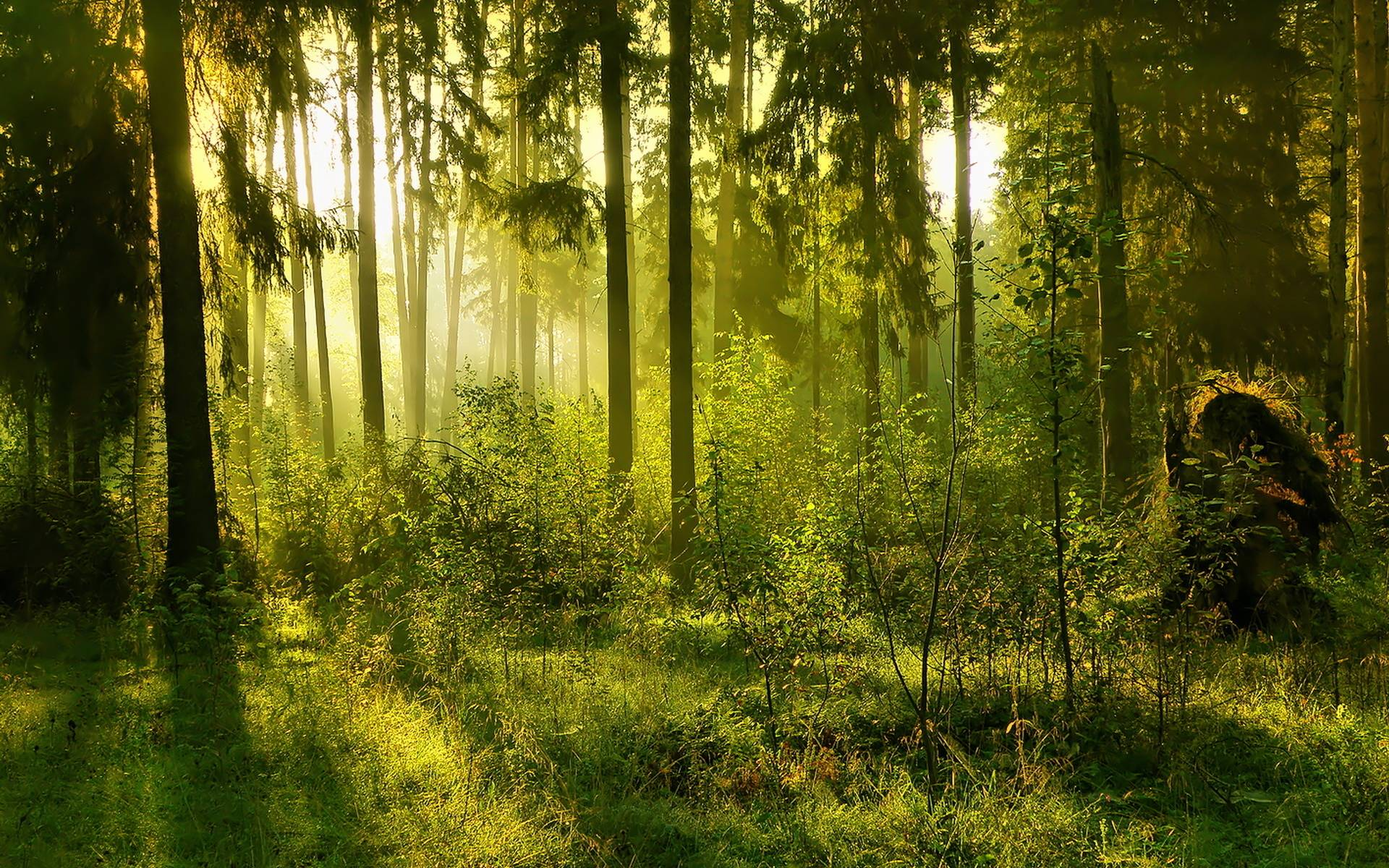 Forest Backgrounds Pictures