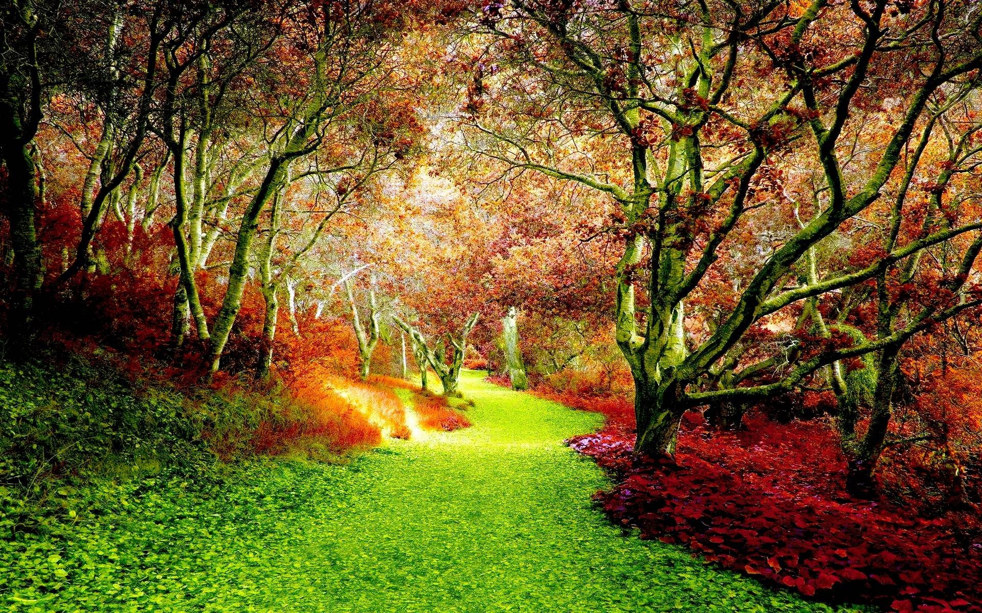 fall woods backgrounds wallpapers - photo #31