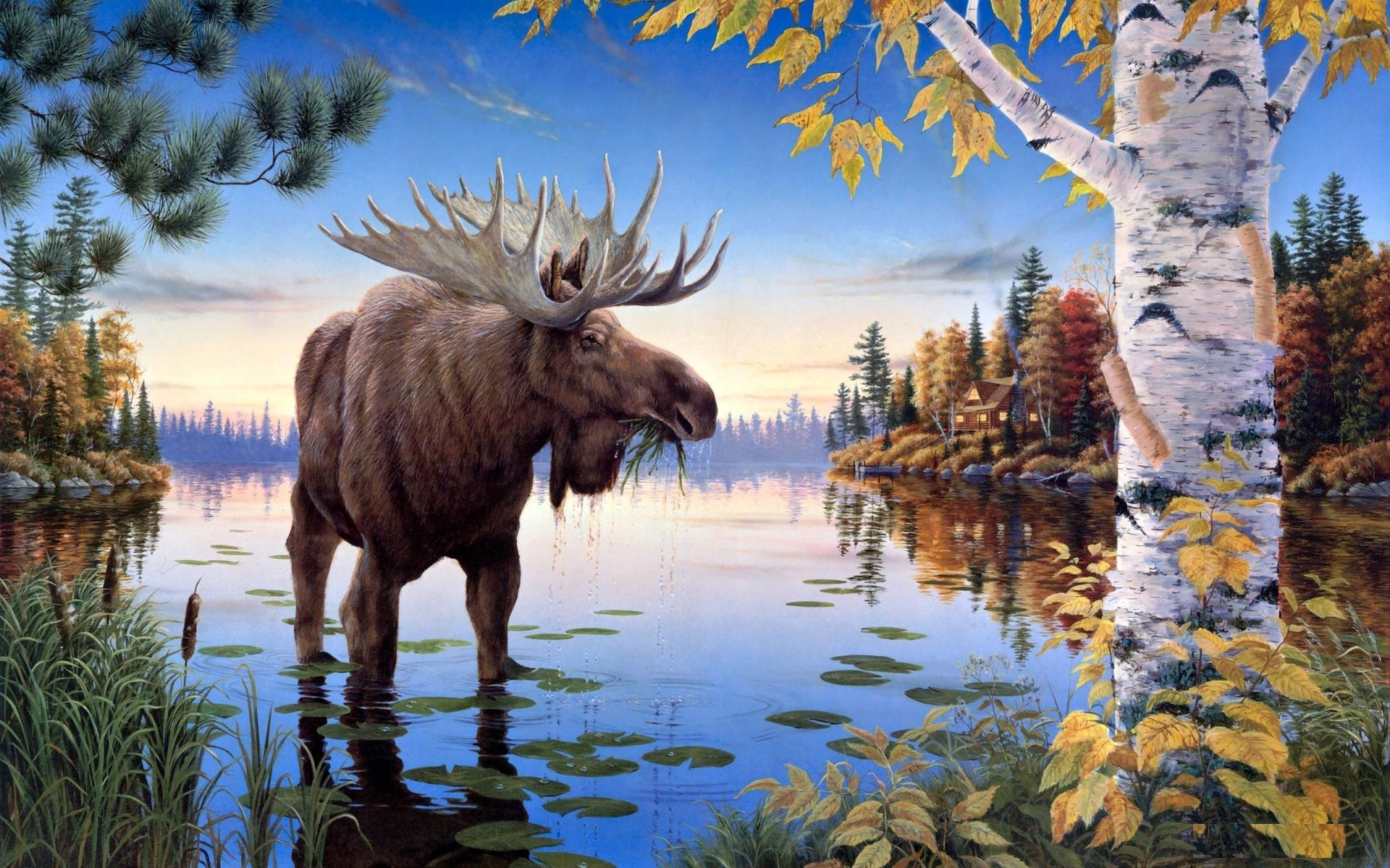 Moose Wallpapers