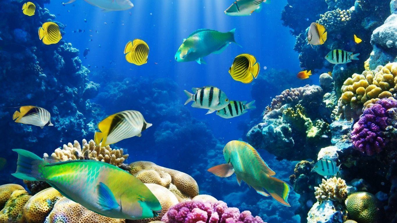 Free Download nature fish coral reef exotic hd 1920x1080 pixel ...