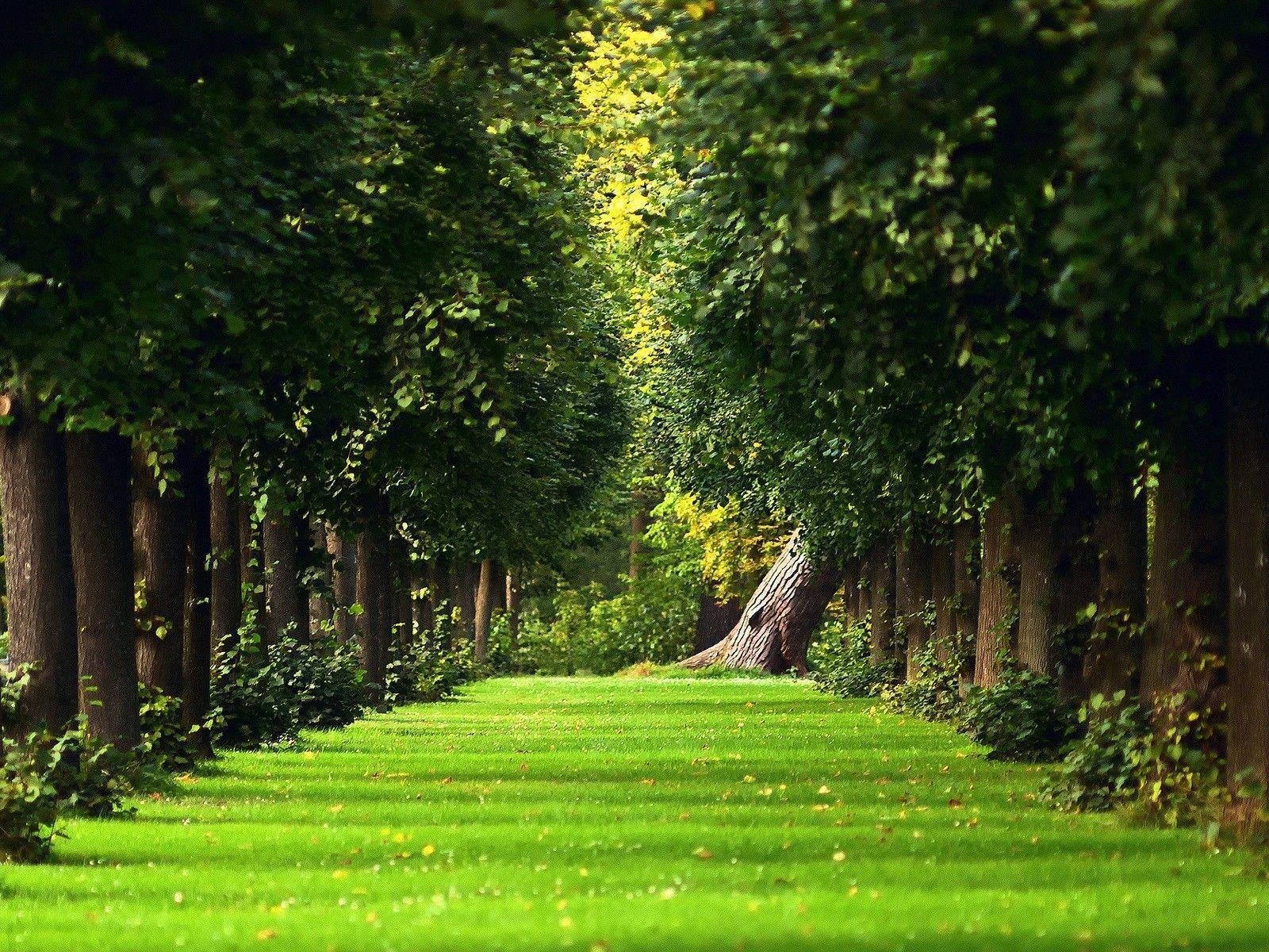 Wallpaper download garden - Download Beautiful Green Garden Wallpaper Full Hd Wallpapers
