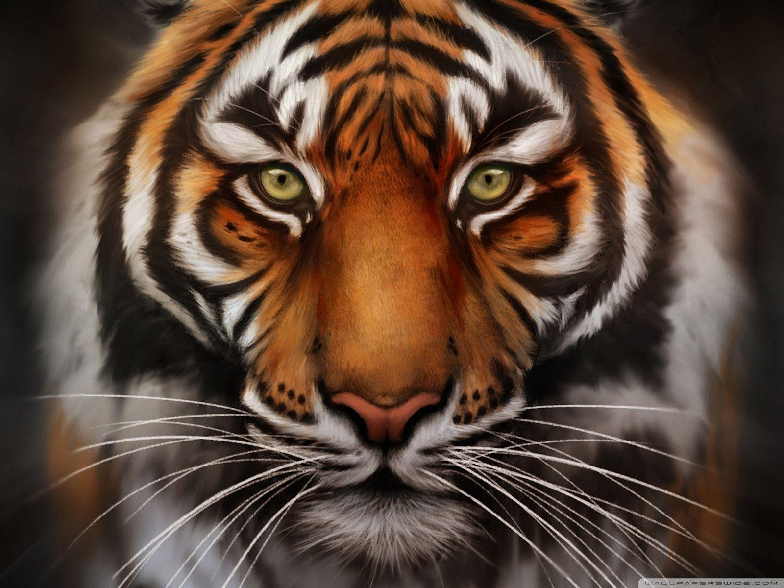 Tiger Face Wallpapers Wallpaper Cave