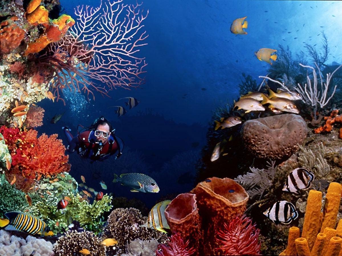 scuba diving wallpaper wallpapers - photo #11
