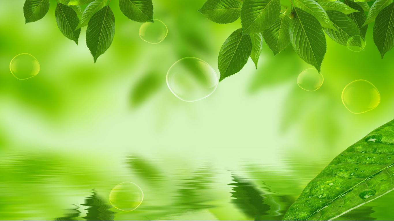 leaf background wallpaper -#main