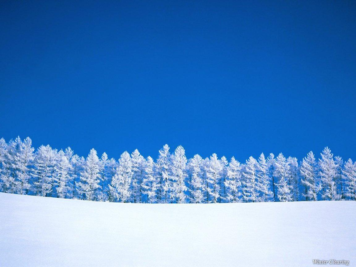 Winter Trees - Winter Wallpaper (509498) - Fanpop