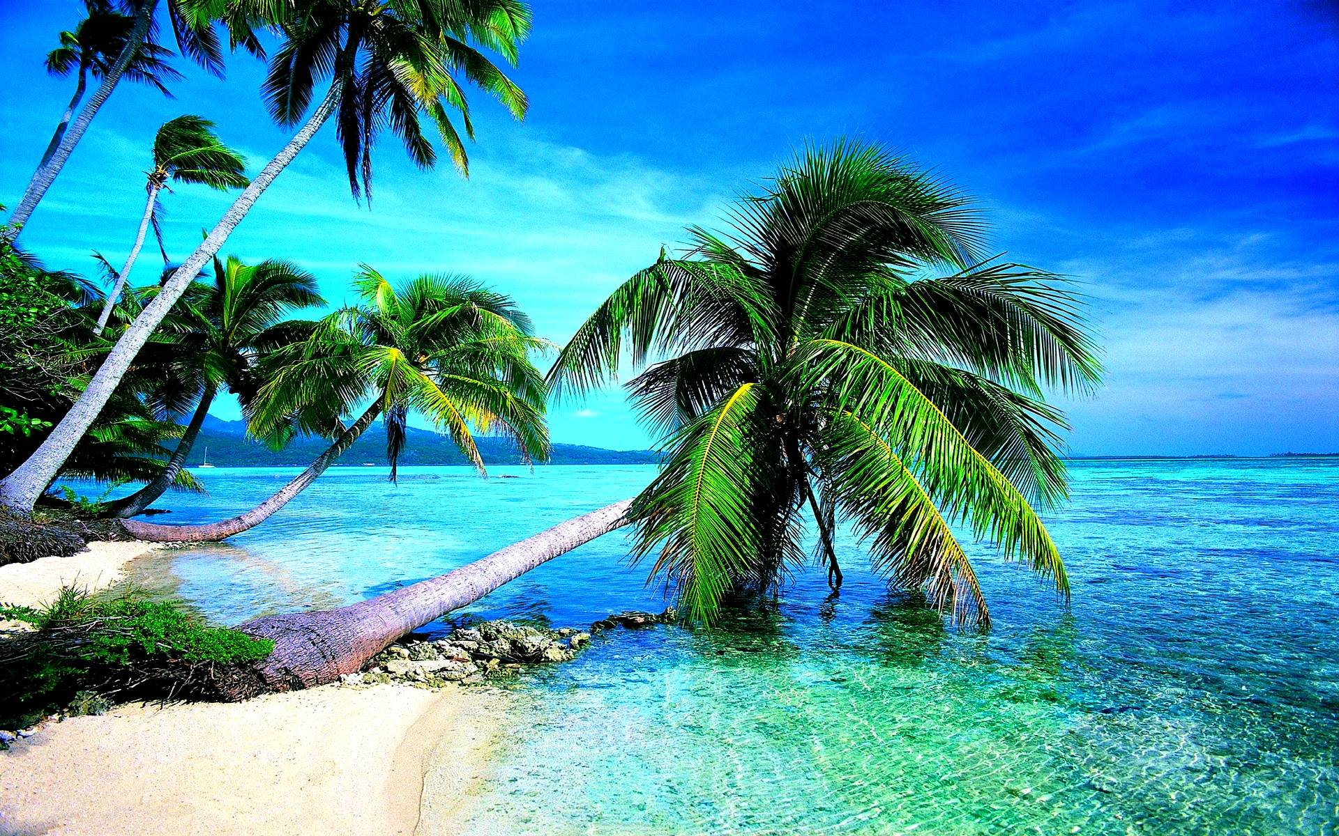 Hd Tropical Island Beach Paradise Wallpapers And Backgrounds: Tropical Beach Wallpapers Desktop