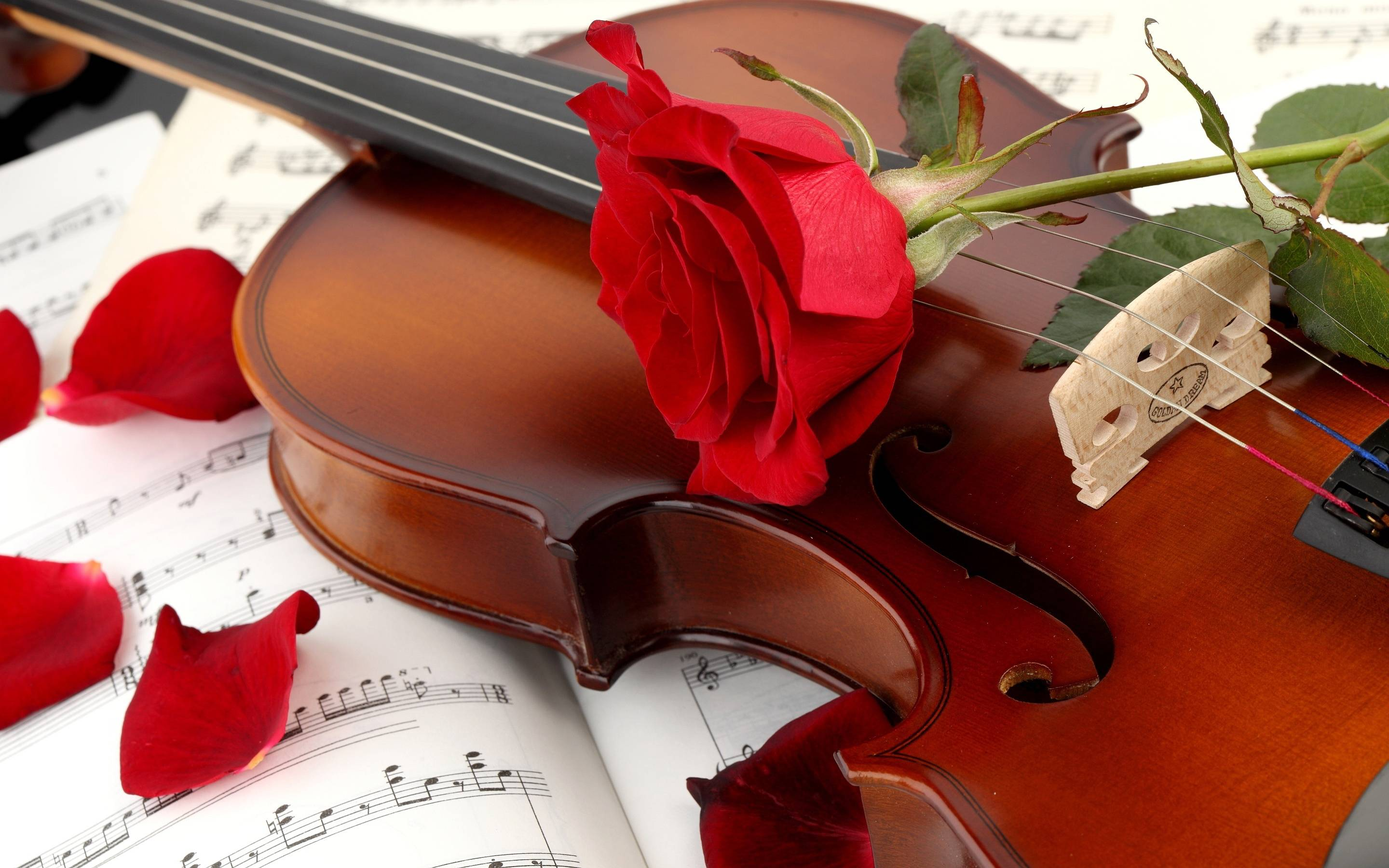 Violin Instrument Music Wallpaper HD #6429 Wallpaper | Wallpaper ...