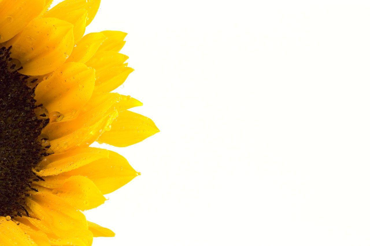 Wallpapers For Sunflower Tumblr Background
