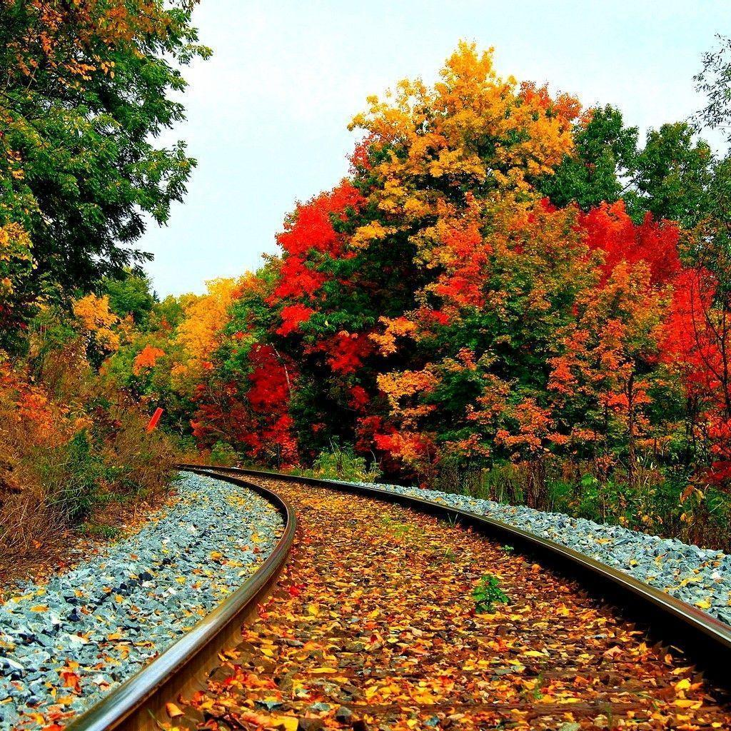 Amazing Scenery: Fall Scenery Wallpapers