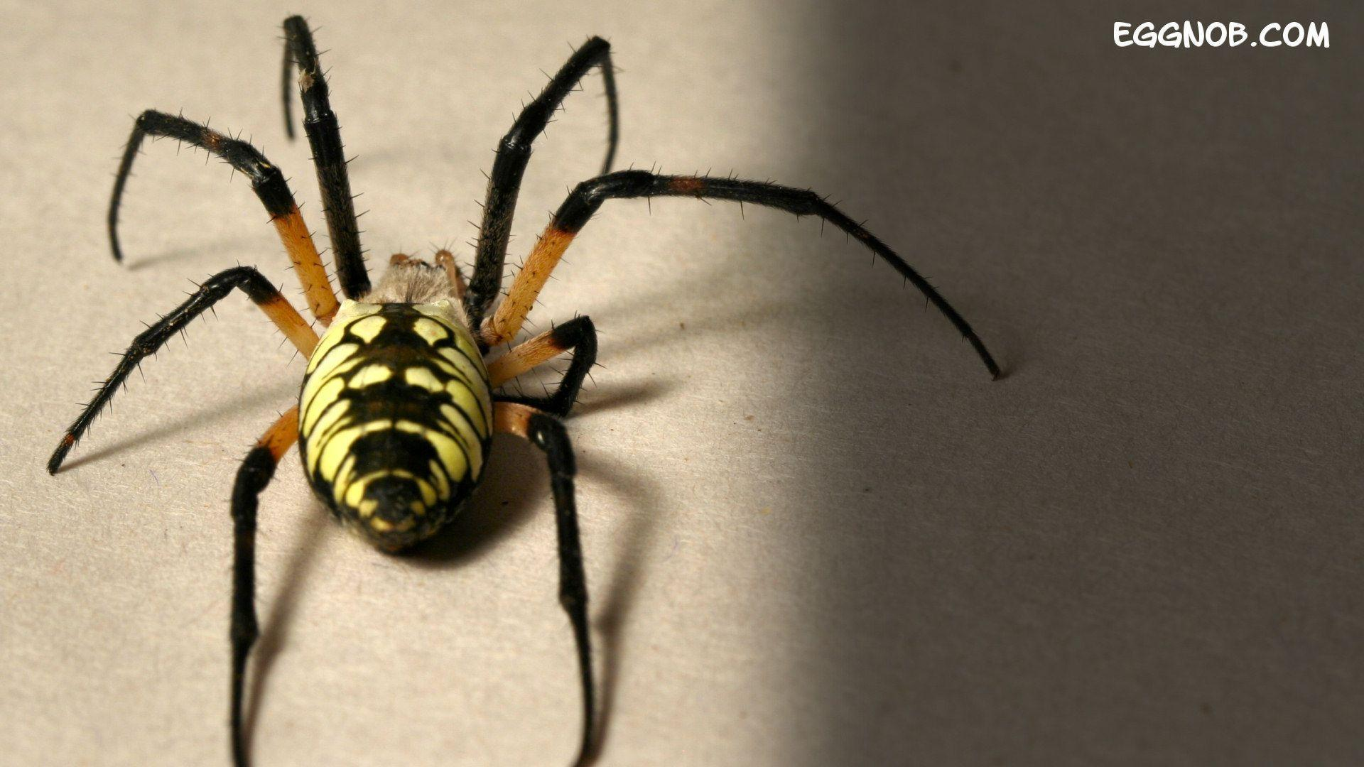 Big Spider HD Wallpapers - HD Wallpapers Inn