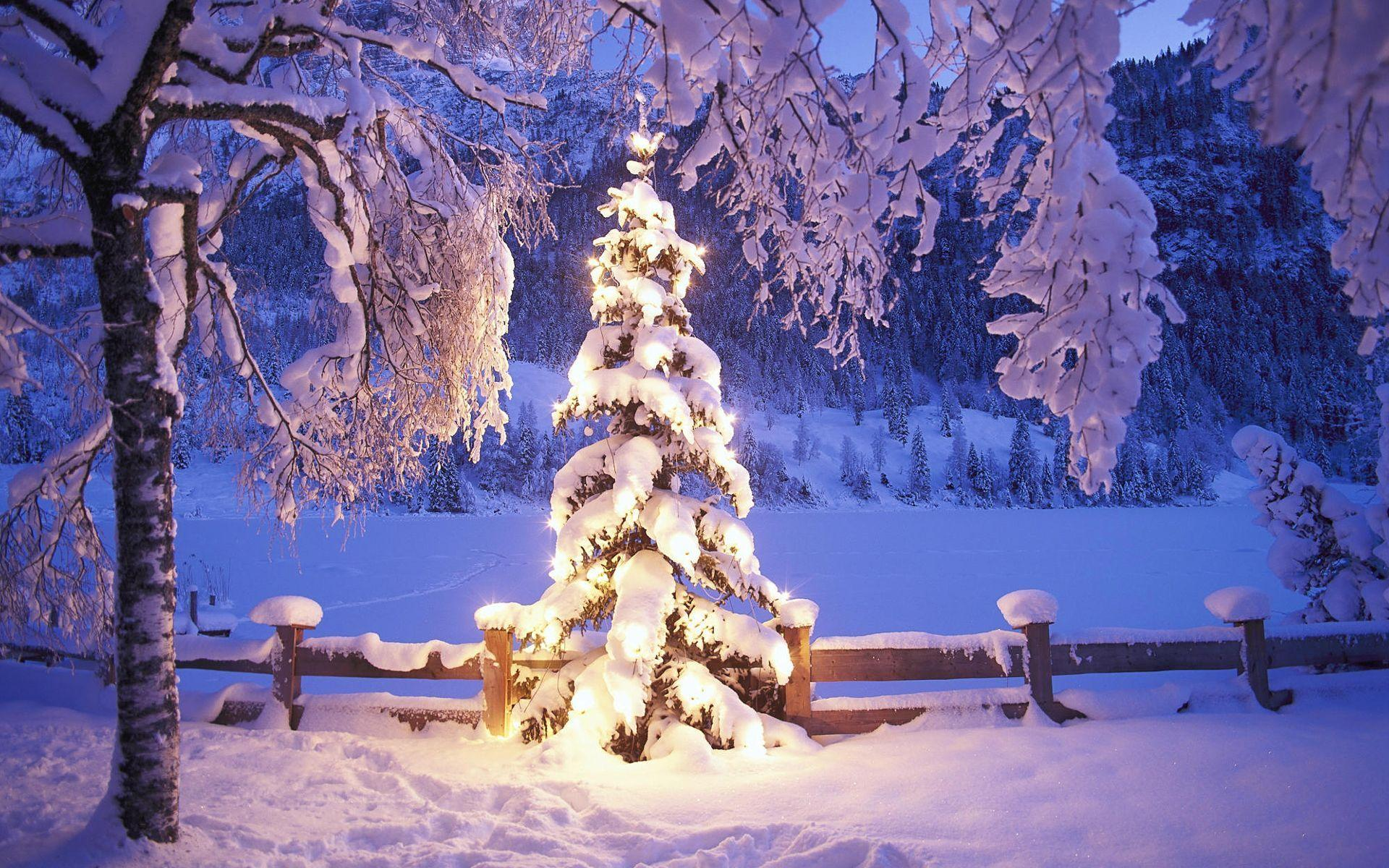 Christmas Tree HD Wallpapers Free Download