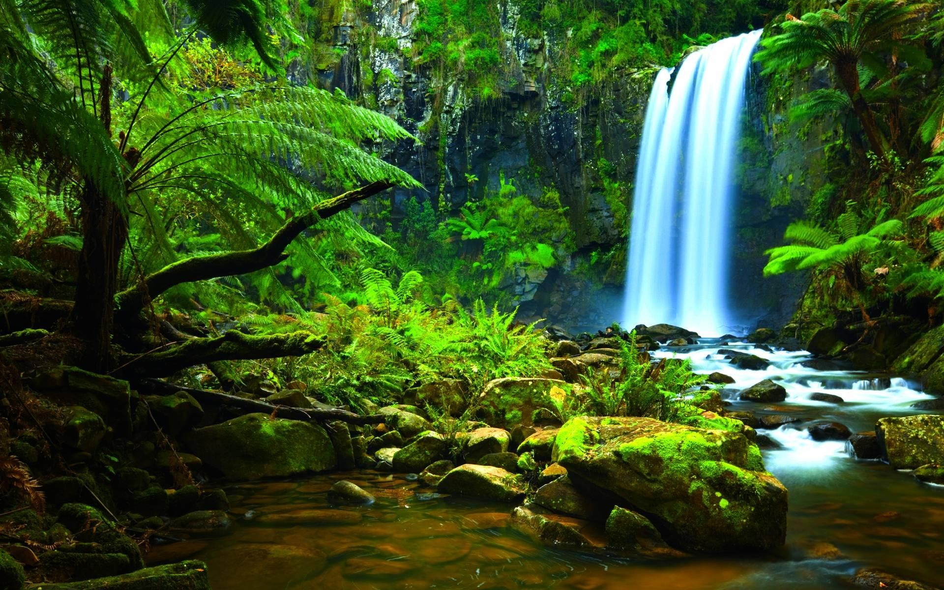 rainforest wallpapers wallpaper cave