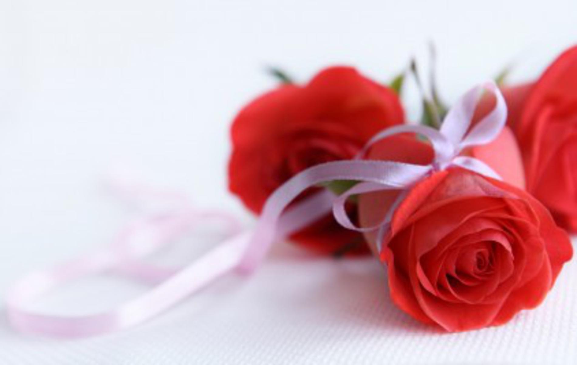 Hd wallpaper rose - Hd Wallpaper Rose Flower Rose Flower Hd Background Wallpaper 66 Hd Wallpaperscom
