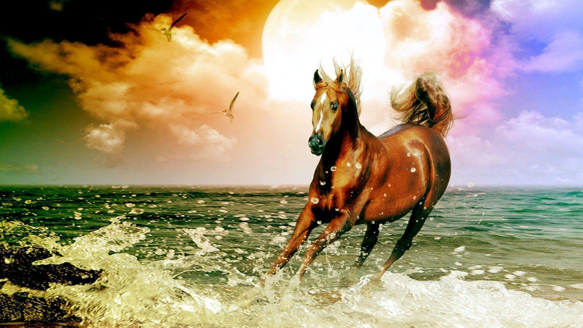 arabian horse beach desktop wallpaper high quality wallpapers