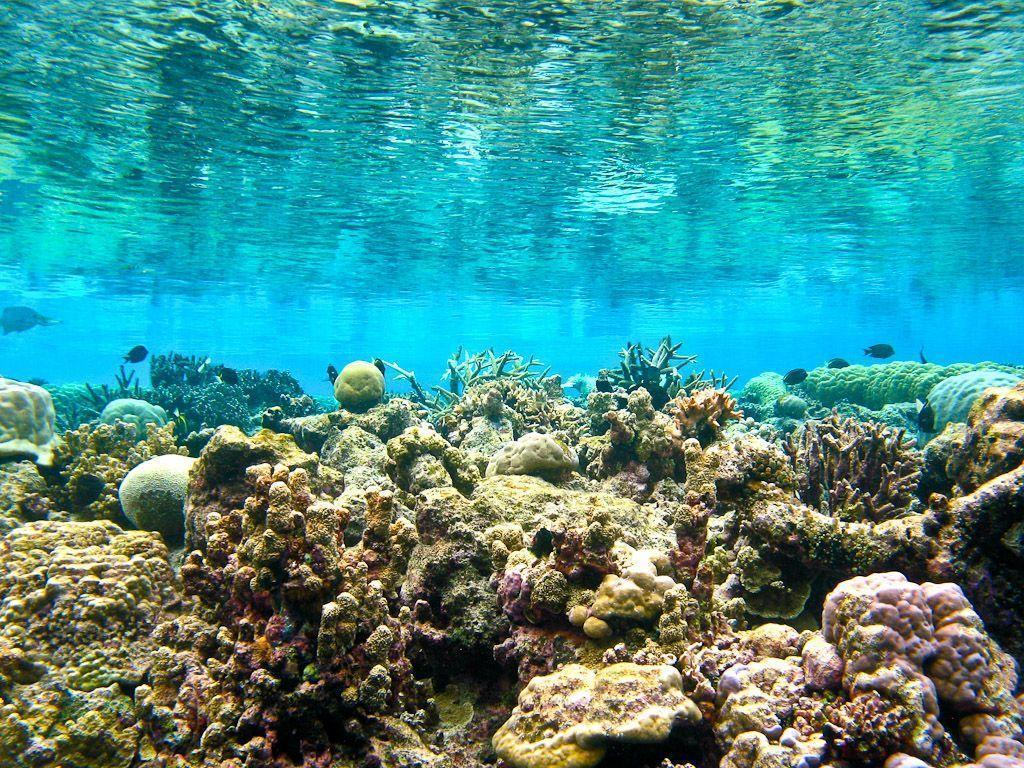 coral reef backgrounds