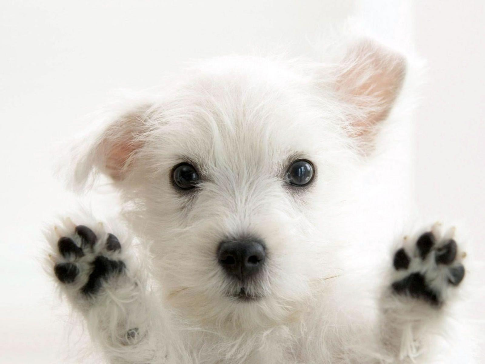 So Cute White Dog Photo Wallpapers