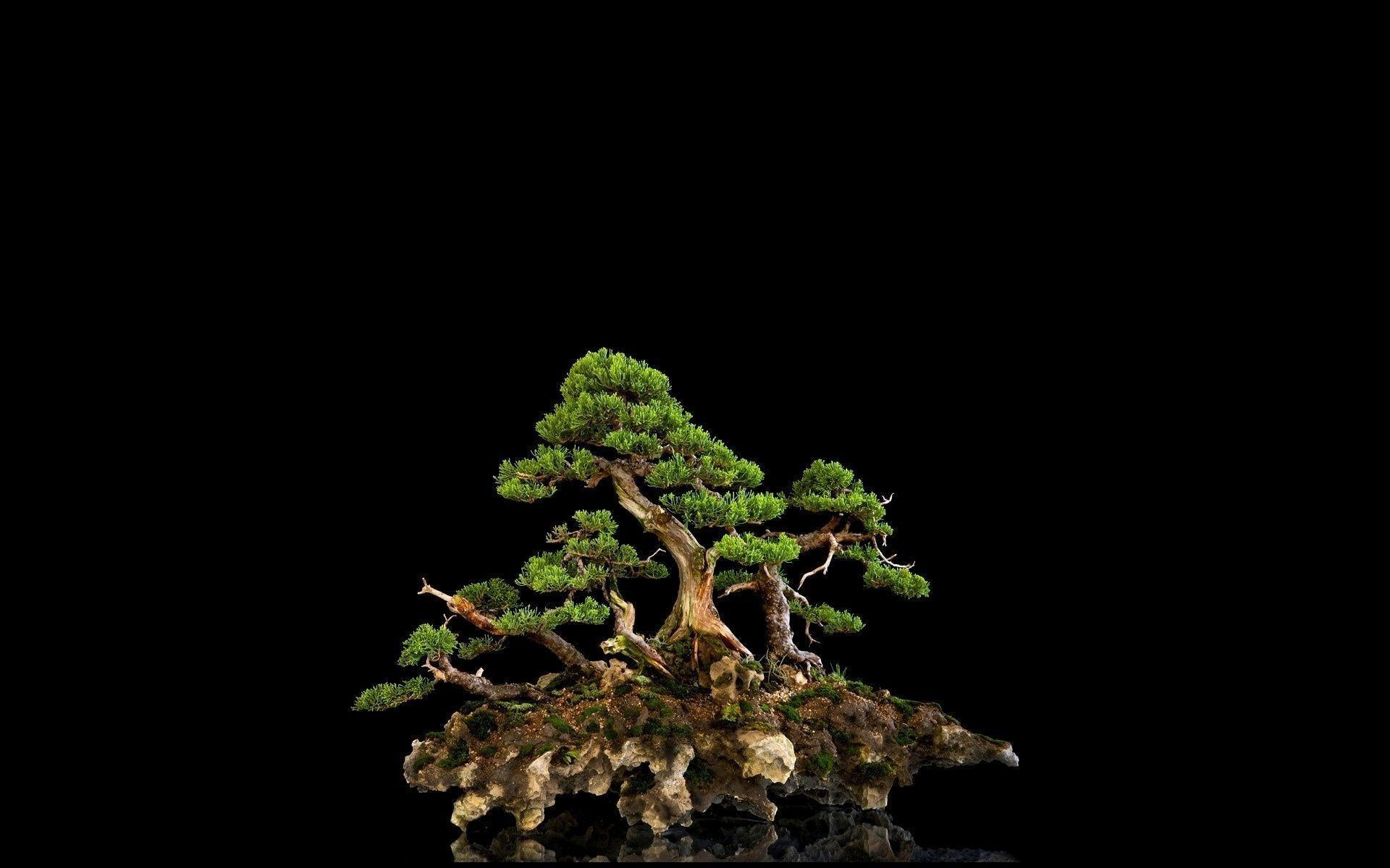 Beautiful Bonsai Tree HD Wallpapers | Photo and Wallpapers