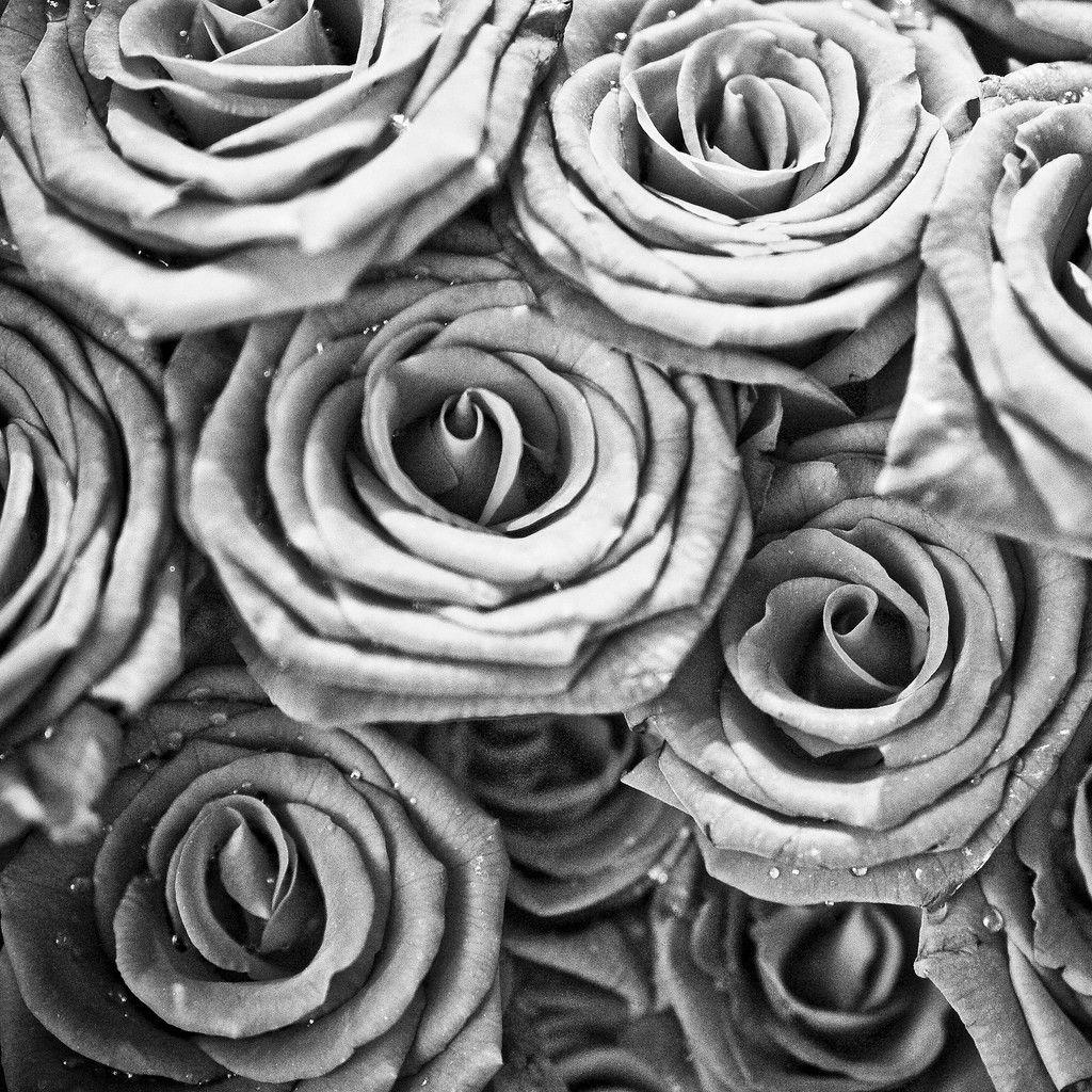 roses rose ipad wallpapers flower hawk thomas grace chandelier wallpapersafari plant gray grayscale floral wallpapercave