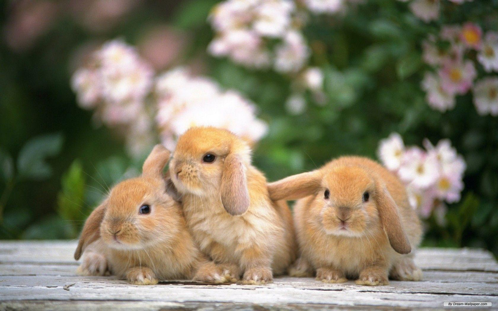 Funny Rabbit Wallpaper 01 | hdwallpapers-