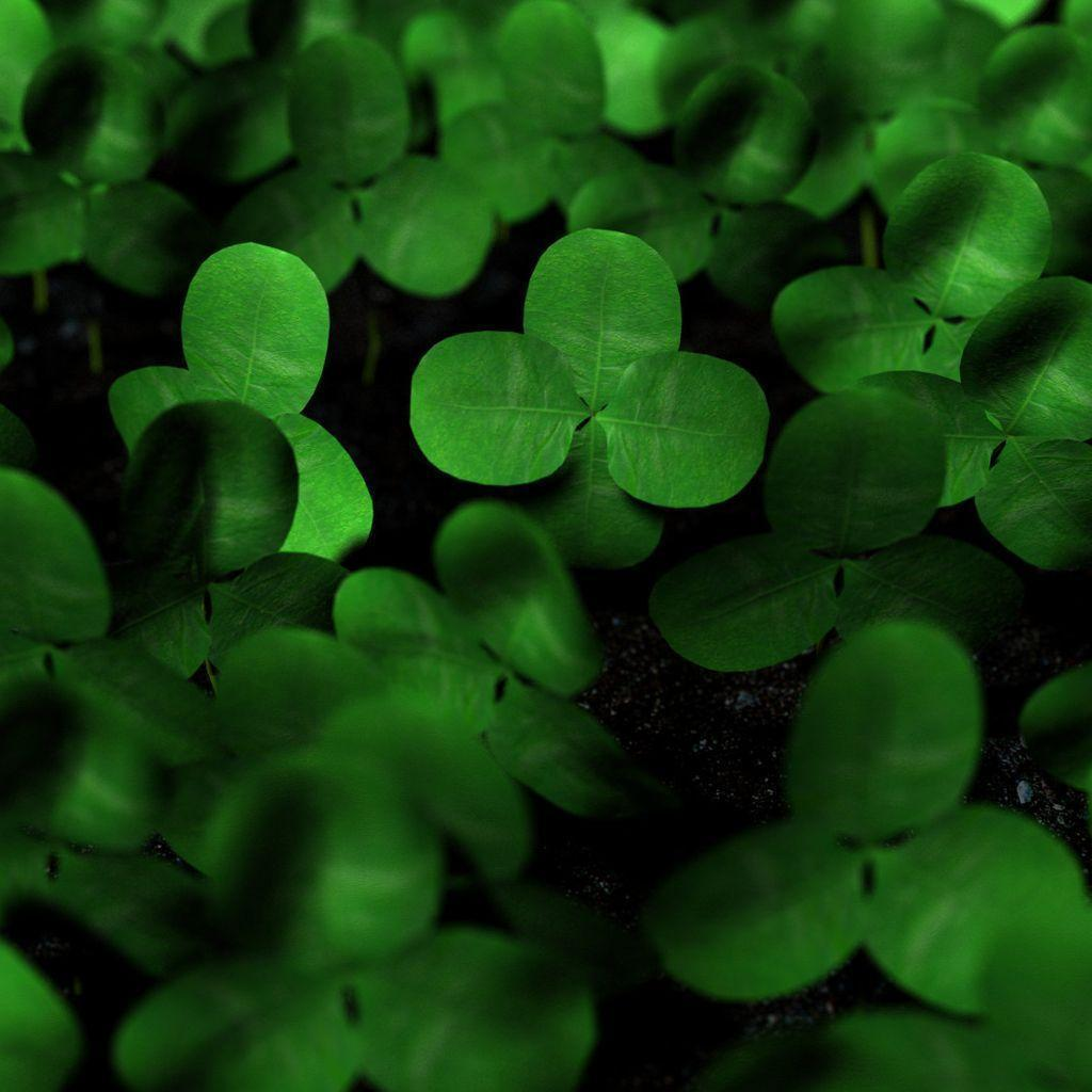 4 leaf clover wallpaper images reverse search