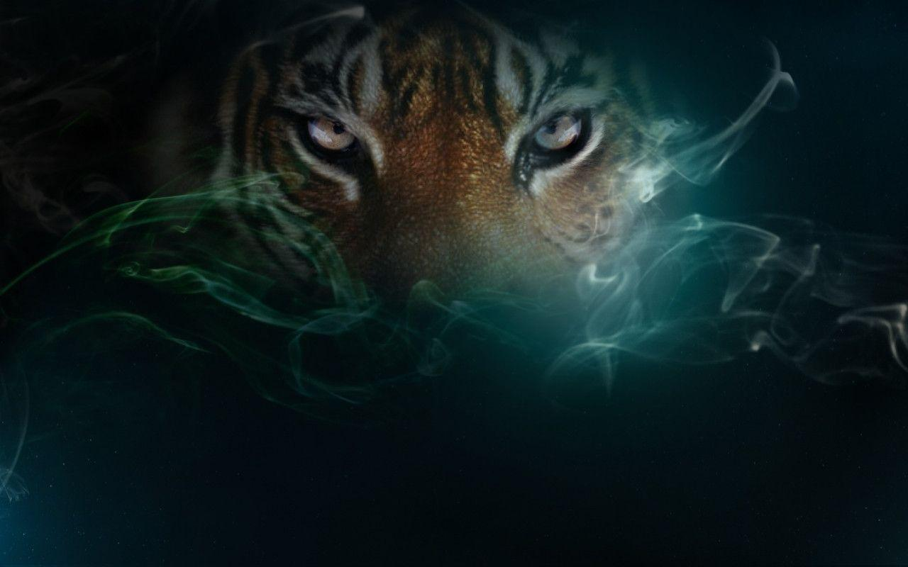 Tiger ♥ ~ - Tigers Wallpaper (10309377) - Fanpop