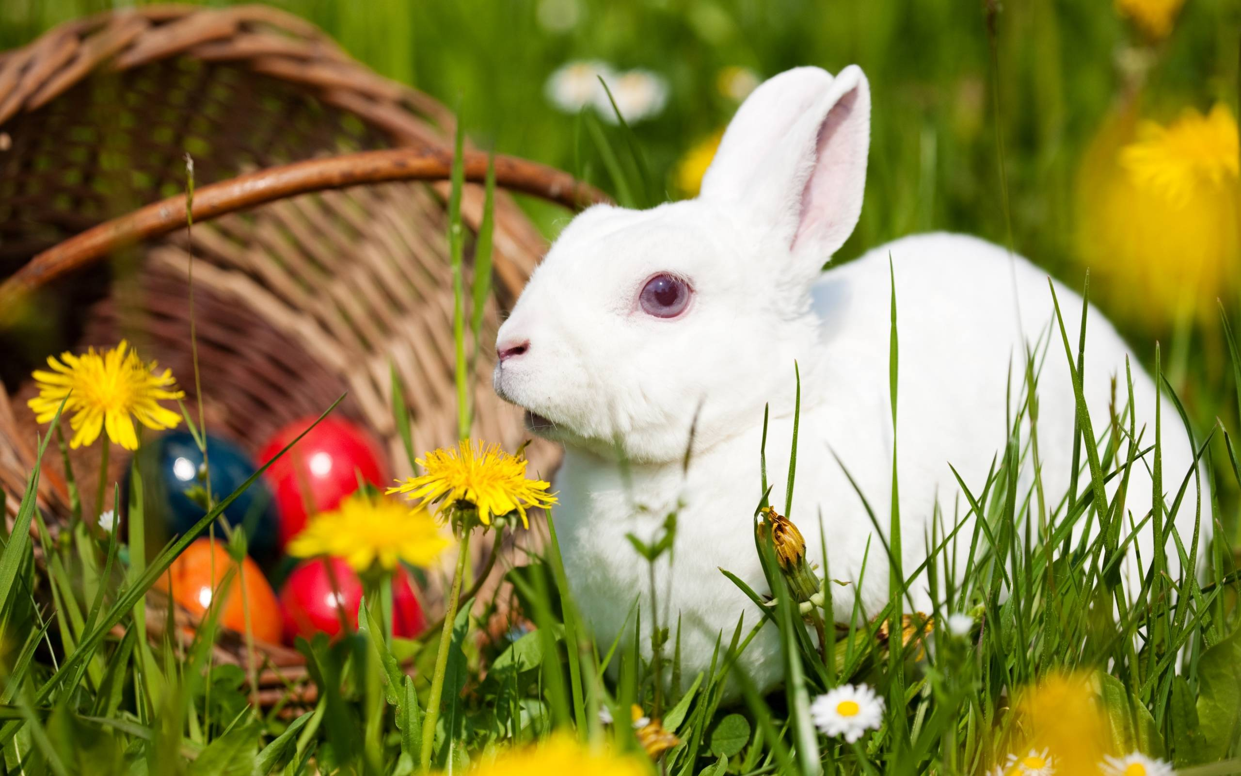 190 Rabbit Wallpapers | Rabbit Backgrounds Page 3