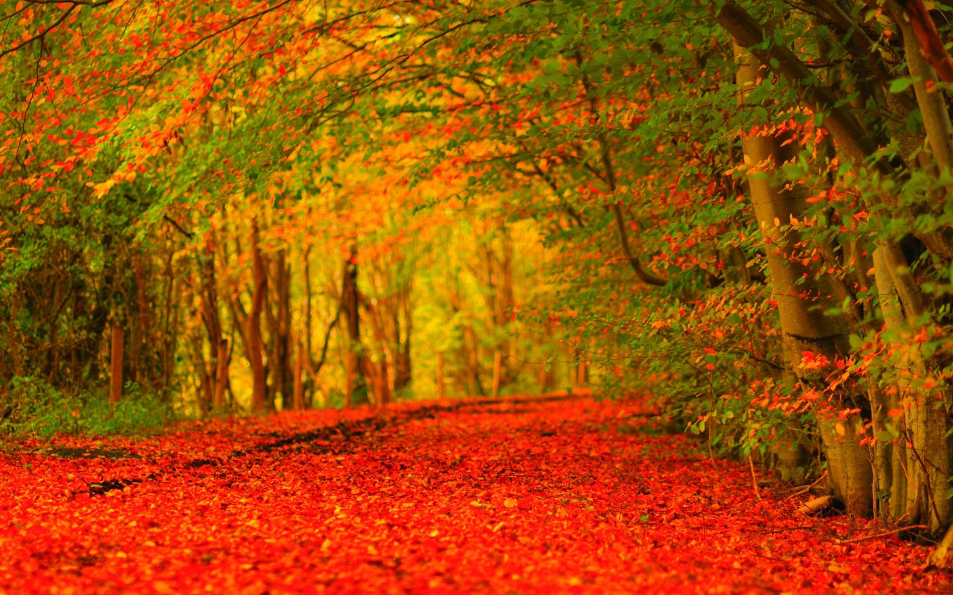autumn hd wallpapers wallpaper cave