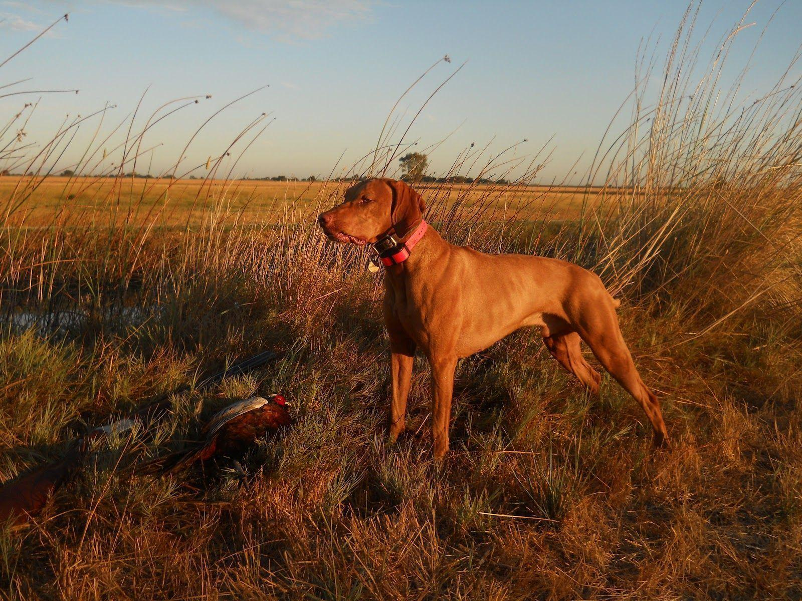 Hunting Dog Tv Shows
