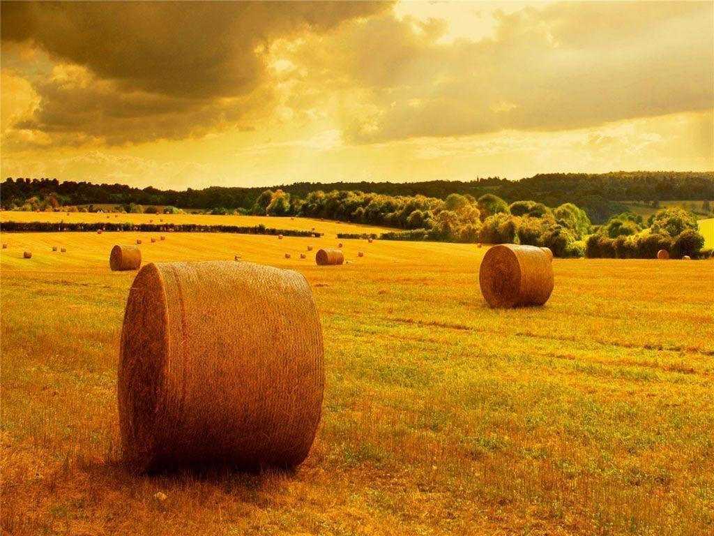 Fall Harvest... Harvest Background Images For Desktop