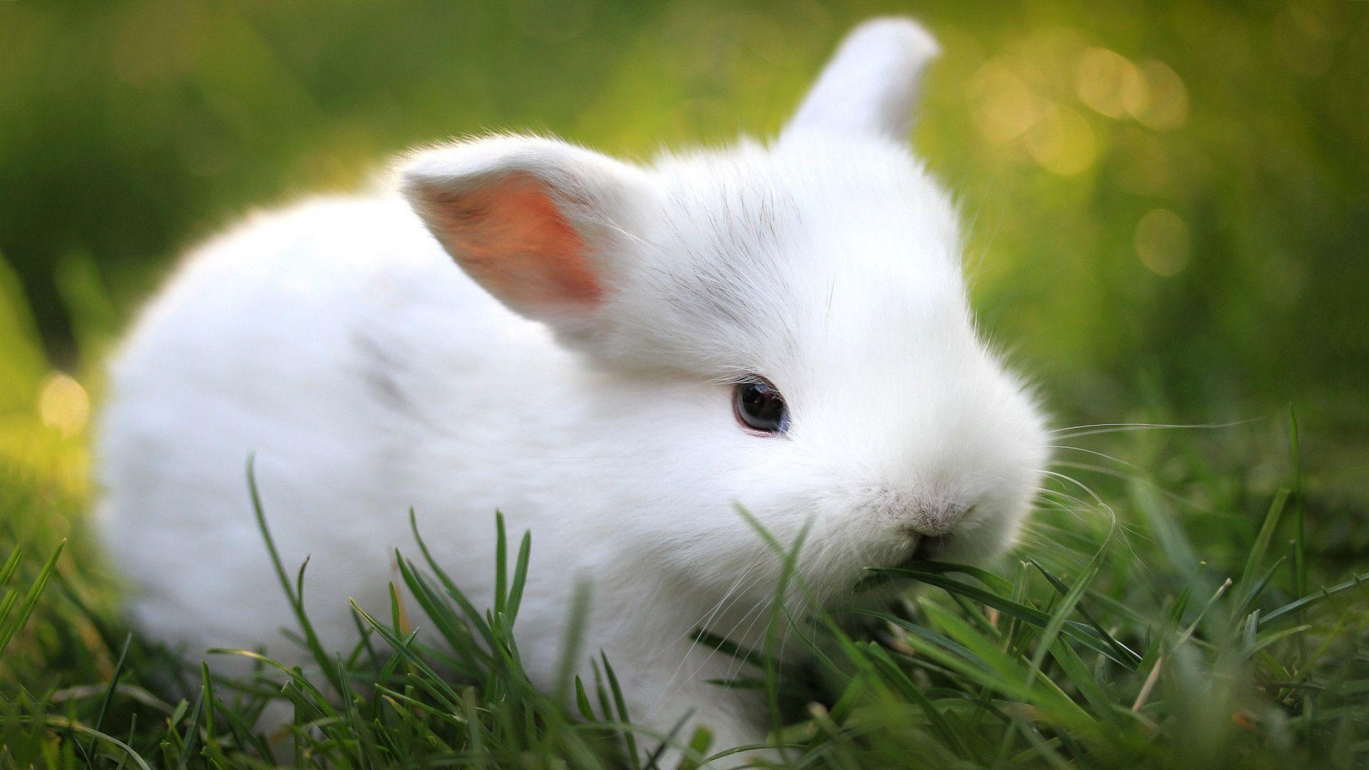 baby bunny wallpapers wallpaper cave