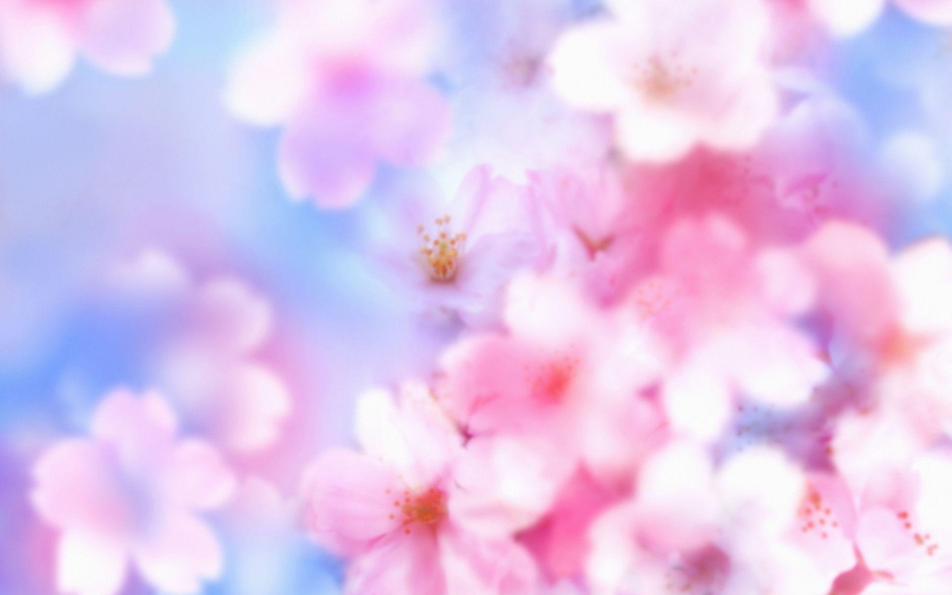 Desktop hd sakura flower background