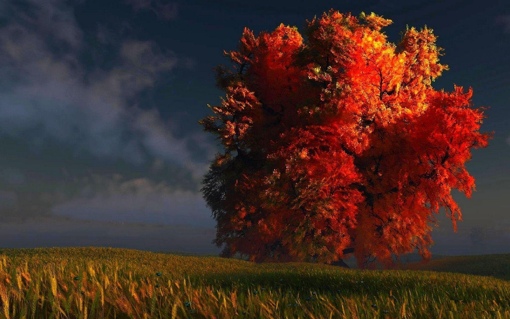 Autumn Tree Wallpaper 61 Images: Fall Trees Wallpapers