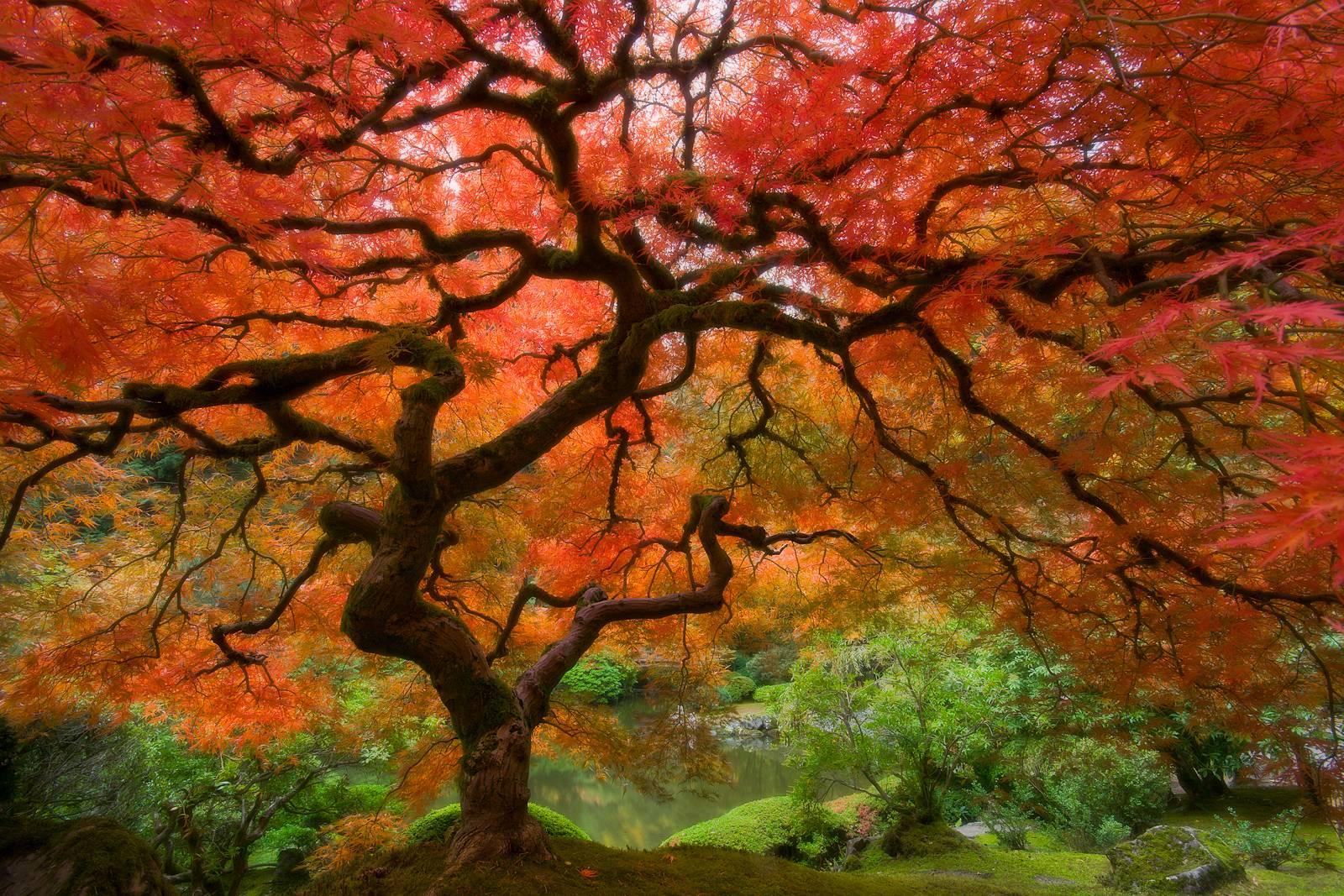 Autumn Scenes Wallpapers Wallpaper