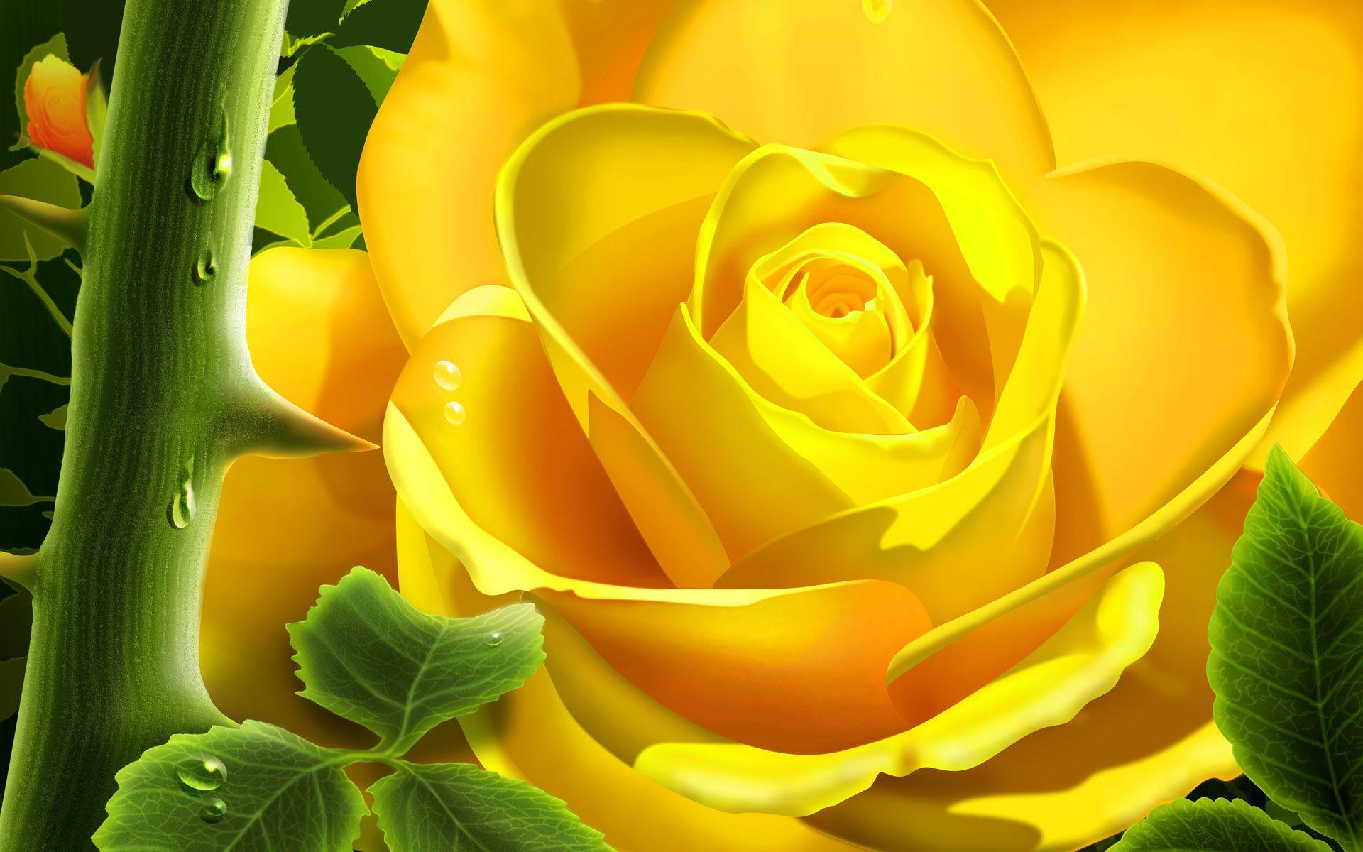 Hd wallpaper yellow rose - Yellow Rose Wallpapers Full Hd Wallpaper Search
