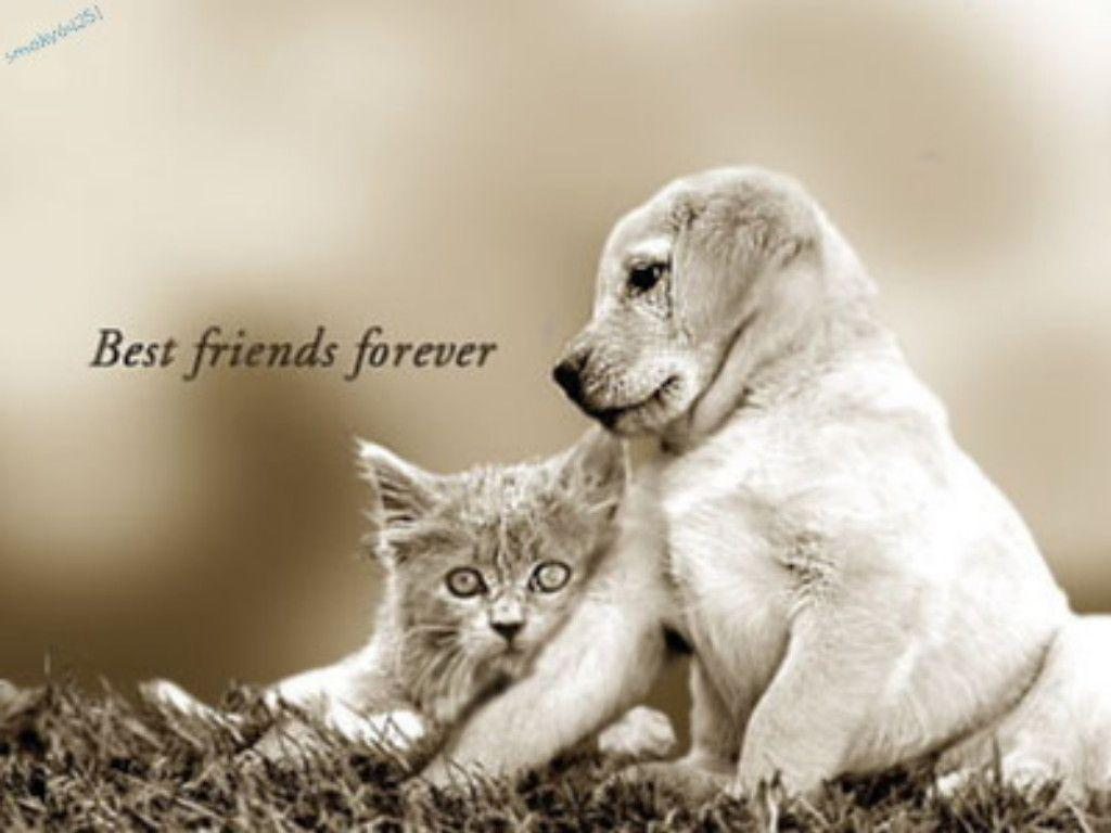 Best Friends Forever Animal Wallpaper Images Pictures