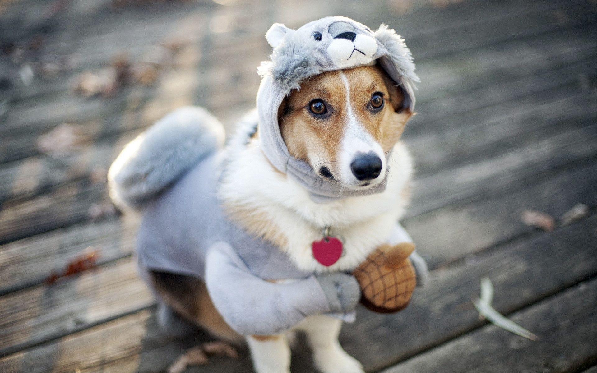 Funny Dog Wallpaper Funny Dog Wallp...