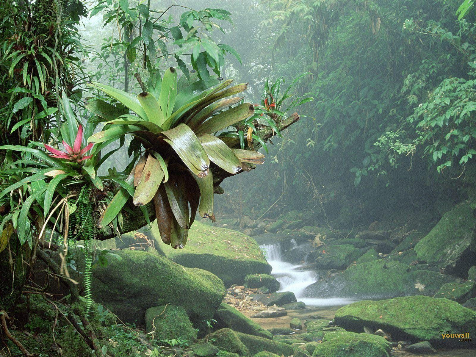 Tropical Rainforest Wallpapers - Wallpaper Cave