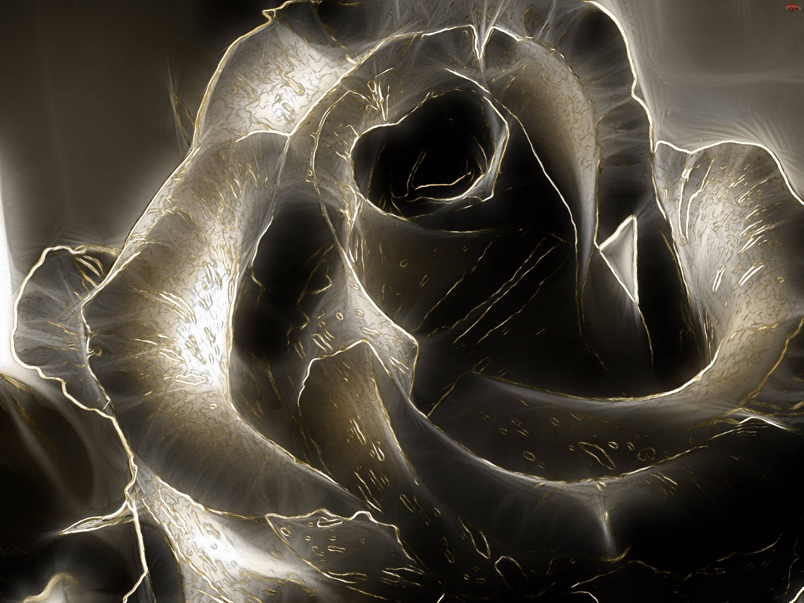 Black rose wallpapers wallpaper cave for Black 3d wallpaper