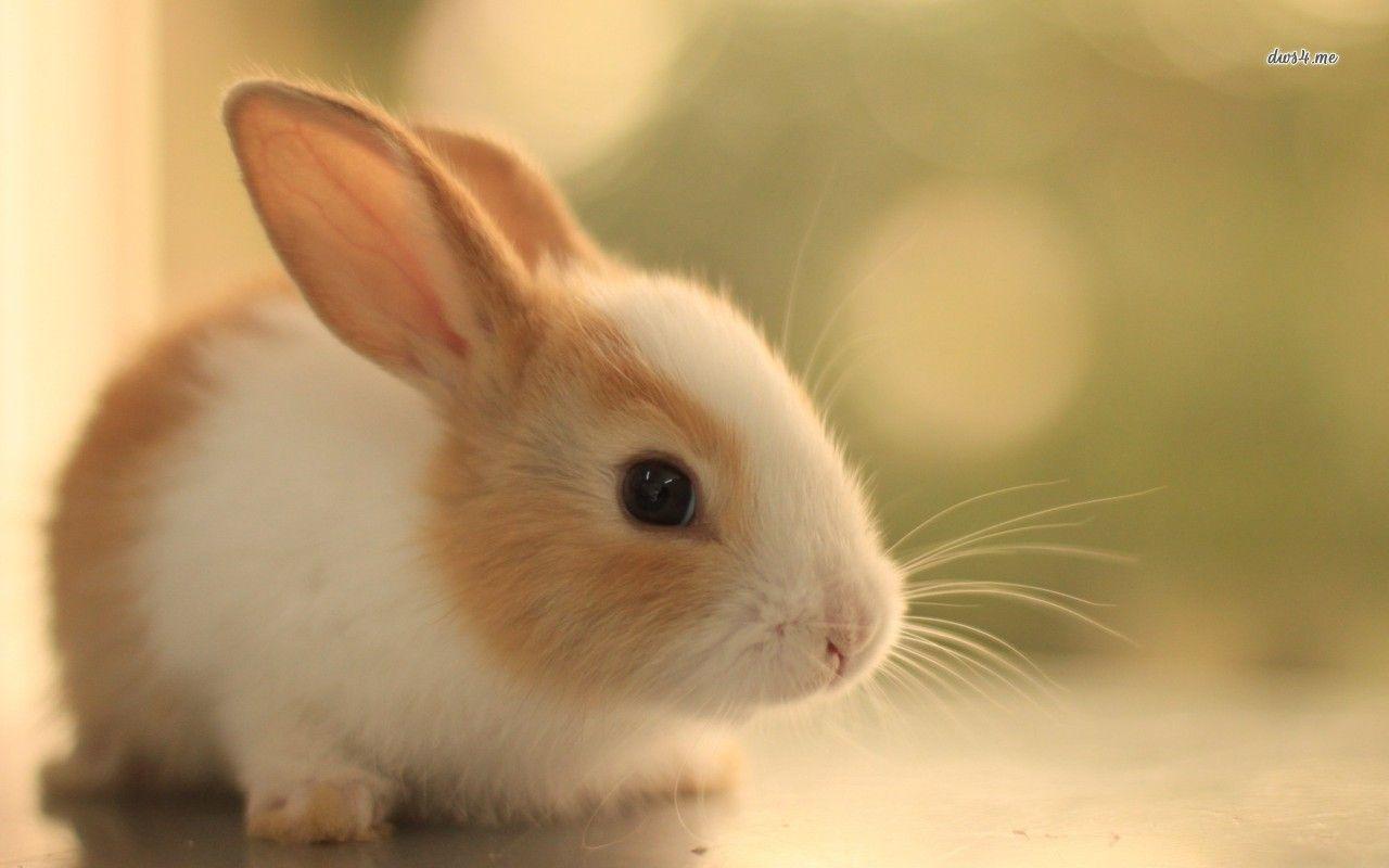 Cute Rabbits Cute Bunny Wall...