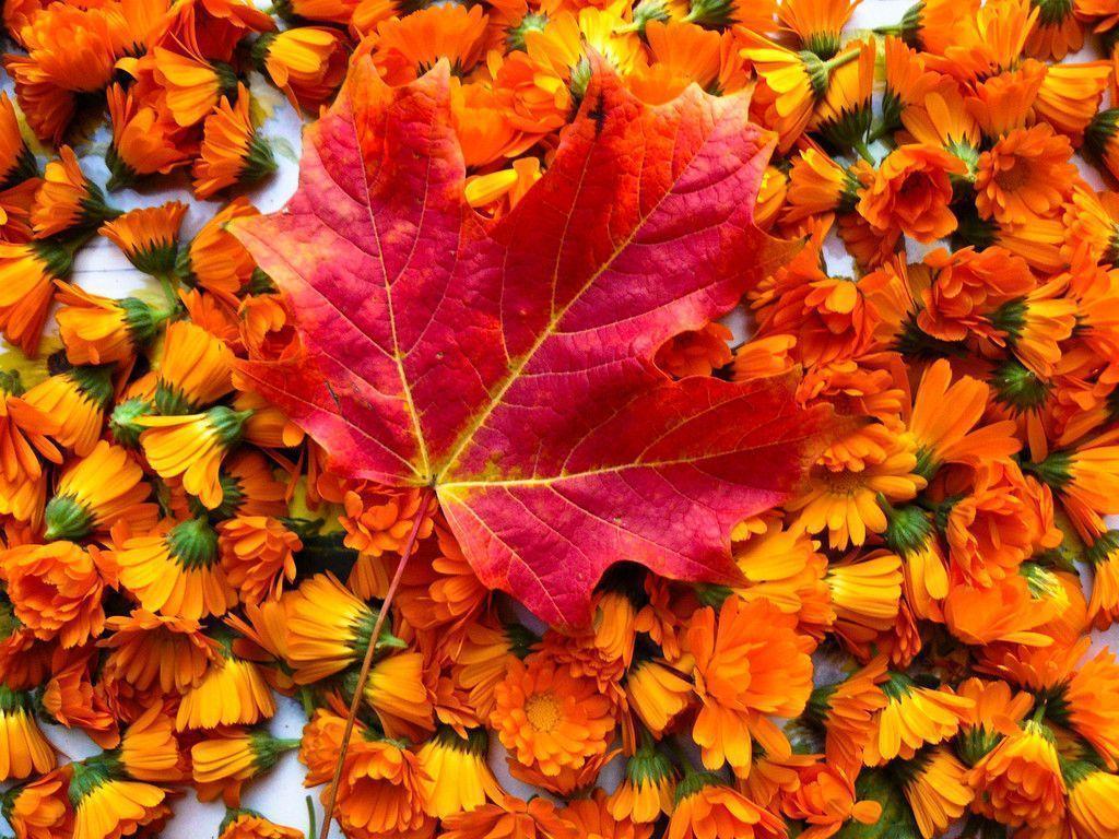 Free Autumn Screensavers Wallpapers Wallpaper Cave