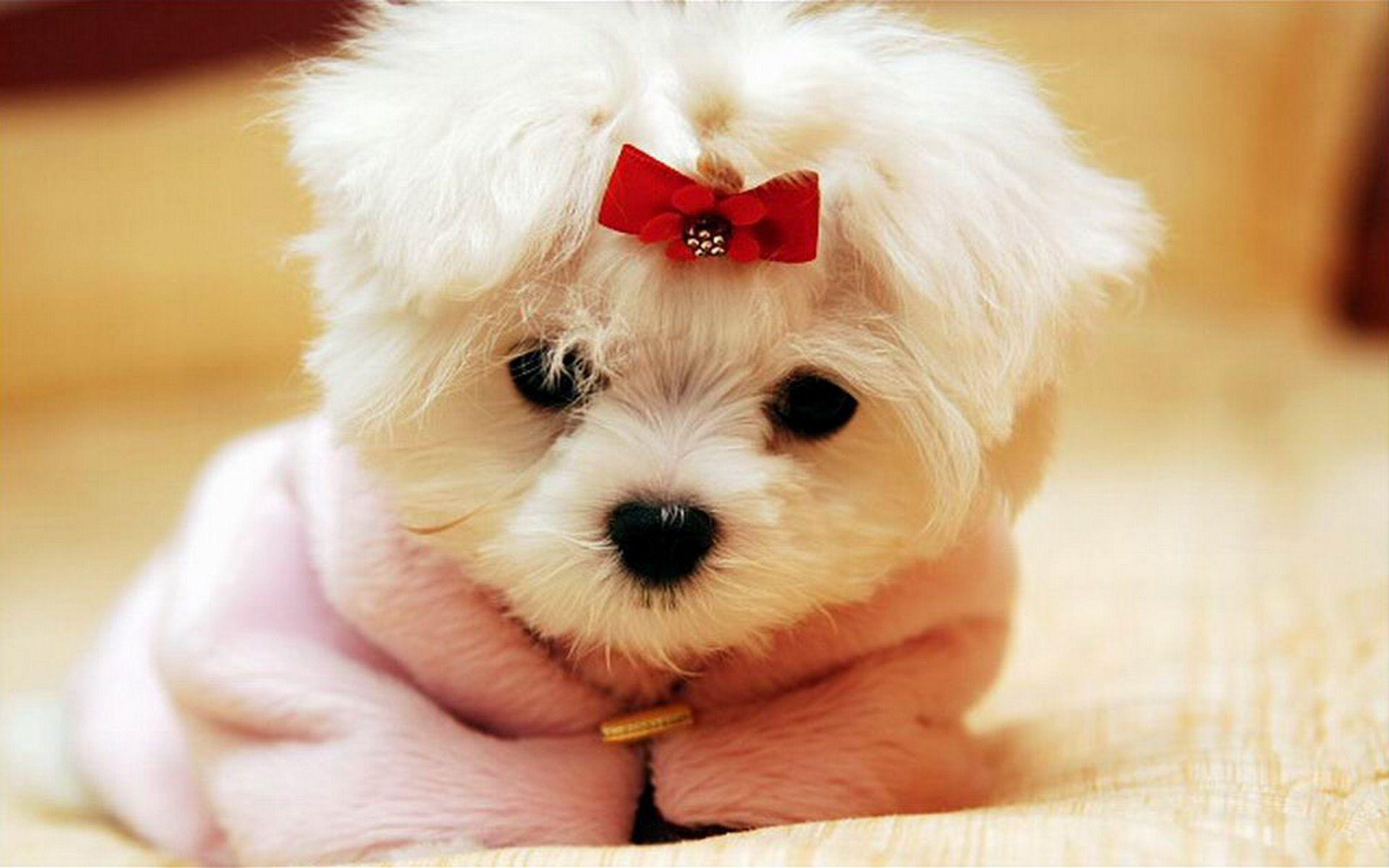 Cute HD Wallpapers